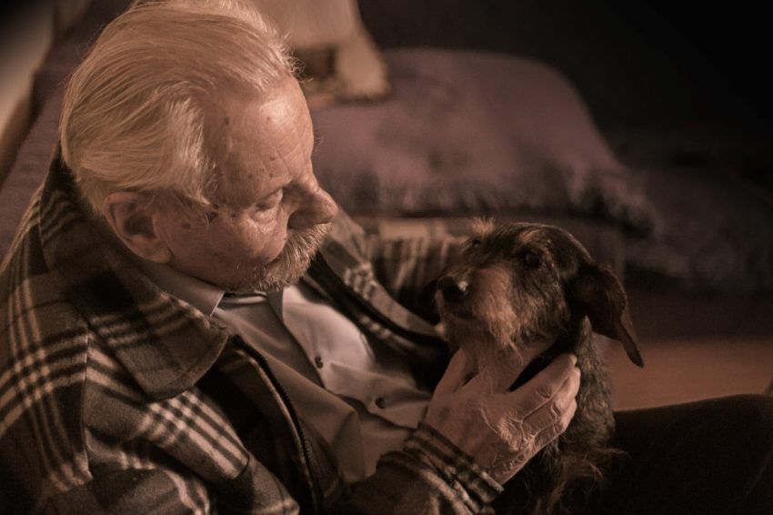 best companion pet for seniors golden cavaliers