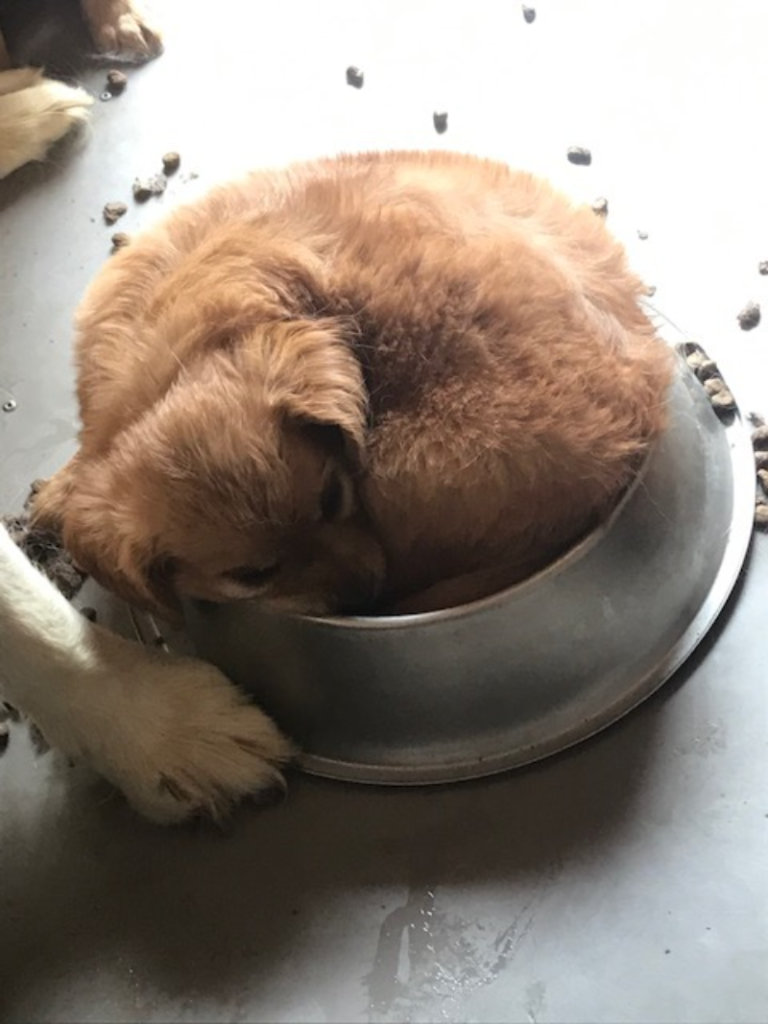 Let sleeping dogs lie - Dog sleeping positions